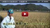 前田自然農法米動画