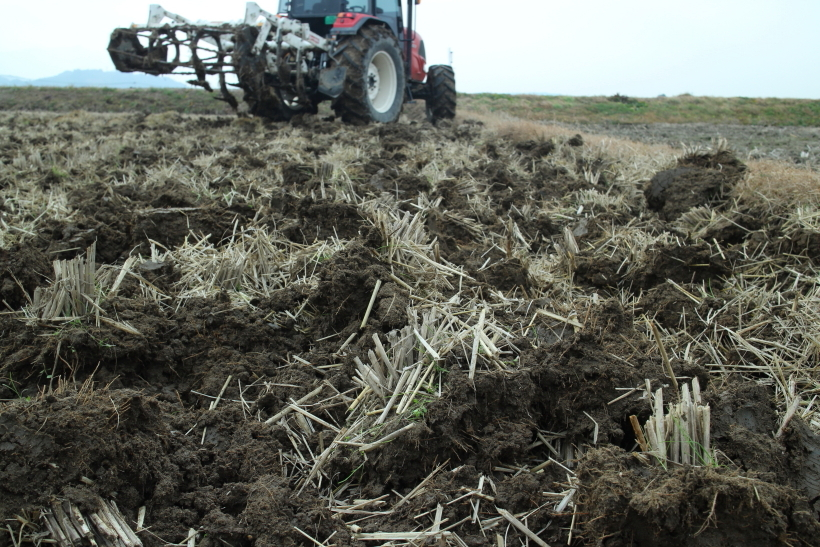 自然農法・自然栽培米で天地返しをする理由