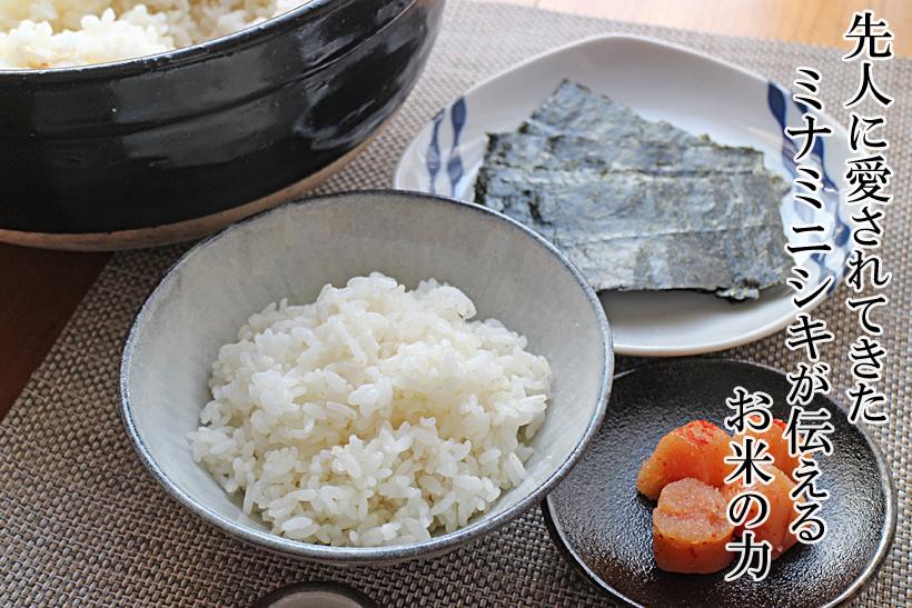 前田自然栽培米ミナミニシキトップ
