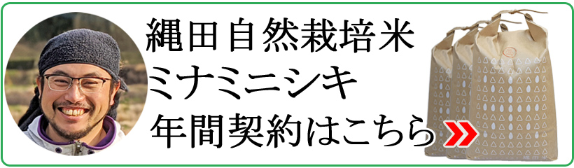 縄田ミナミニシキ年間契約