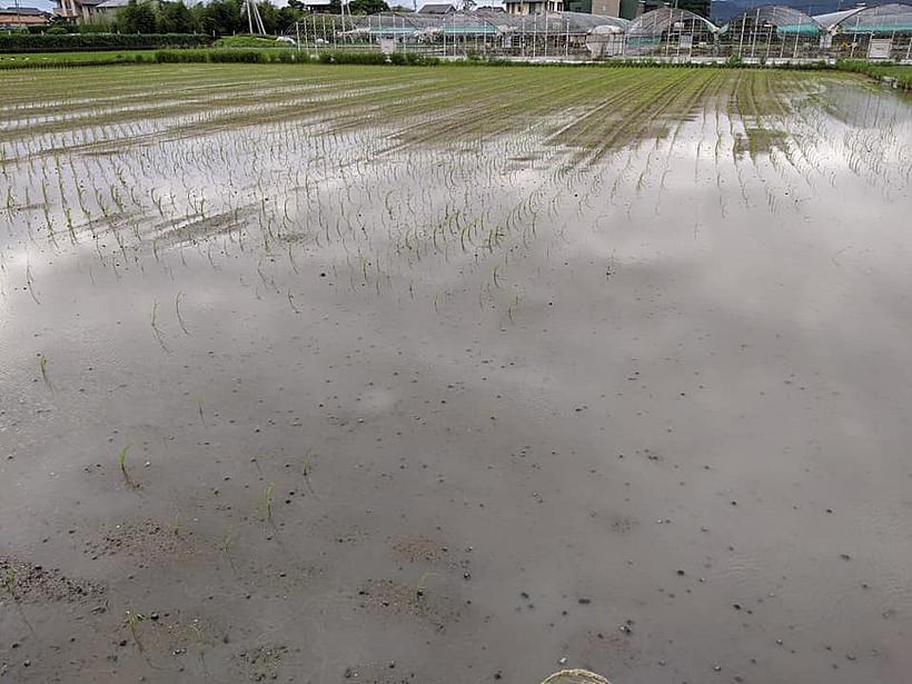 水害後の田んぼ