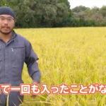 自然栽培米ミナミニシキを作る縄田さんのウンカが来ない理由とは
