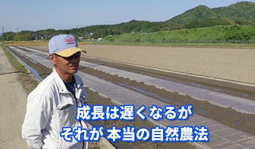 前田ミナミニシキ播種作業