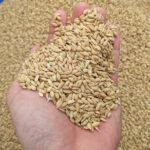 無農薬で自家採種にこだわる理由|自然栽培米ミナミニシキ